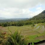 Reisfelder und Reisterrassen