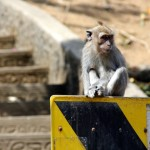 Die wilden Tiere auf Bali