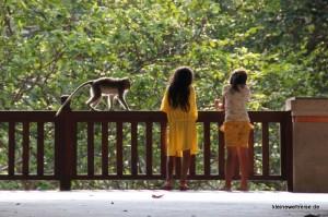 im Monkey Forrest