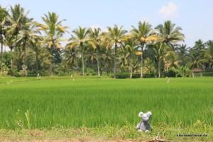 noch mehr Fanta, noch mehr Reis