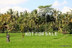 Reis ist wichtiges Nahrungsmittel. Deswegen bitte kein Hotel hier bauen.