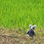 noch mehr Reis