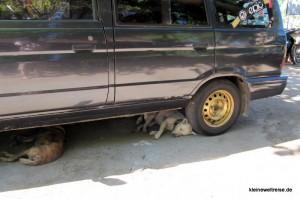 streunende Hunde unter einem Auto