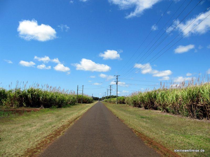 Straße durch Zukerrohr