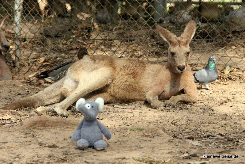 Fanta mit Känguru
