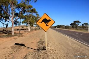 vorsicht Känguru