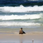 auf Kangaroo Island