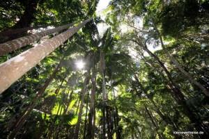 Regenwald auf Fraser