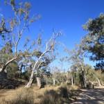 Die Flinders Ranges