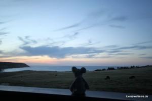 Fanta genießt den Sonnenuntergang mit Kängurus