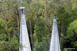 Brücken durch die Baumkronen
