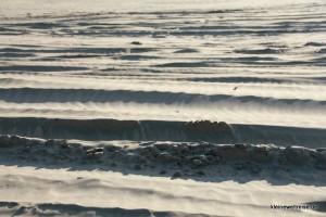 Fahrzeugspuren im Sand