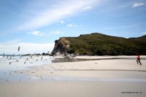 verjagte Möwen am Strand
