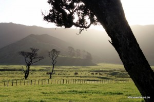 Landschaft am East Cape am Abend