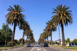 Palmen und tolles Wetter