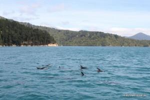 Delphine in Sicht