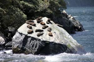 Robben chillen aufm Stein