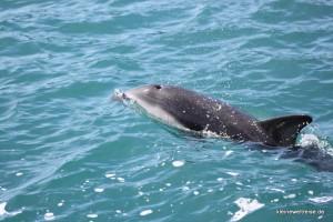 der Delphin begleitet uns