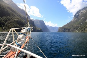 sailing the Milford Sound