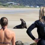 The Catlins: Das Zuhause der Seelöwen