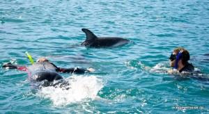 Wir schiwmmen mit Delphin