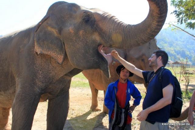 beim Elefanten-Füttern