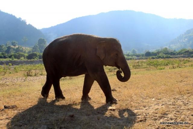 Elefant nach dem Baden