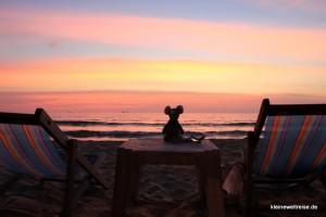 Fanta relaxt bei Sonnenuntergang
