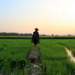 Unsere eindrucksvollen Entdeckungen mit dem Fahrrad in Sukhothai