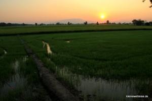 Sonnenuntergang im Reis