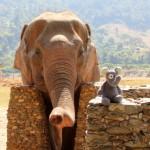 Warum wir nicht auf Elefanten geritten sind
