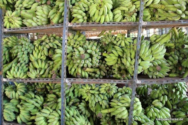 Das Bananenlager ist gut gefüllt