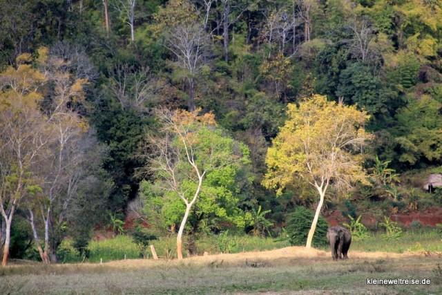 Elefant im Nature Park