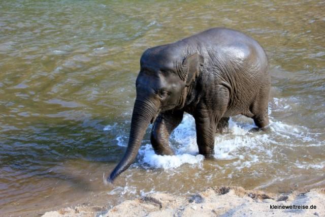 der kleine Elefant im Wasser