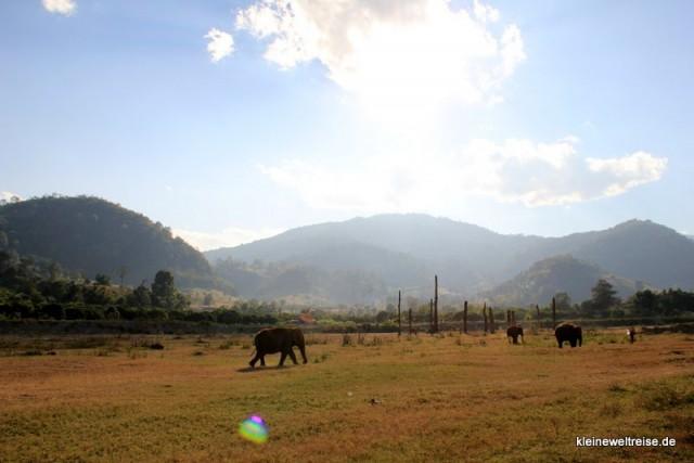 Elefanten auf der Wiese