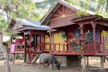 Unsere Hütte mit Wasserbüffel