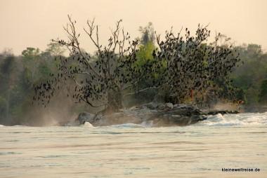 Vögel auf dem Baum direkt am Wasserfall
