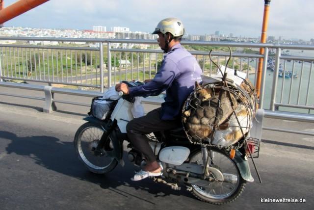 Hunde auf dem Moped
