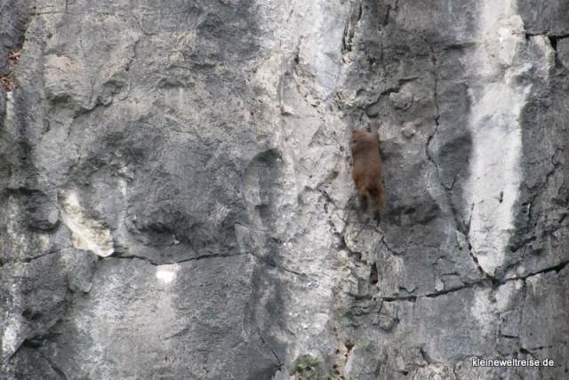 Kalksteinfels mit Affen