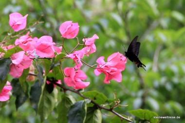 ein Schmetterling!