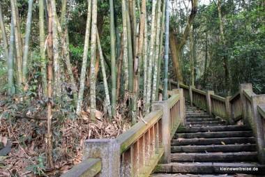 Treppe durch den Bambus