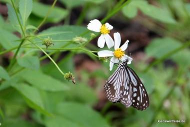 Taiwan ist bekannt für die vielen Schmetterlinge