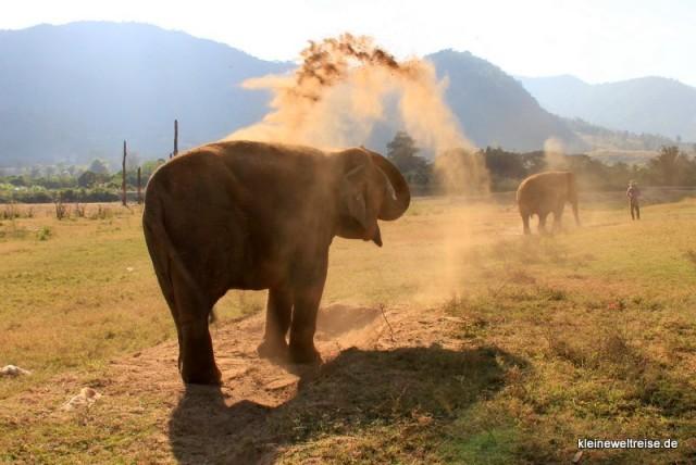 Warten und... dann wirft der Elefant den Sand!