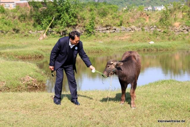 vorsichtig reicht er dem Wasserbüffel das Gras