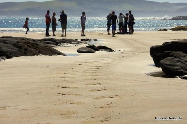 die Spur des Seelöwen
