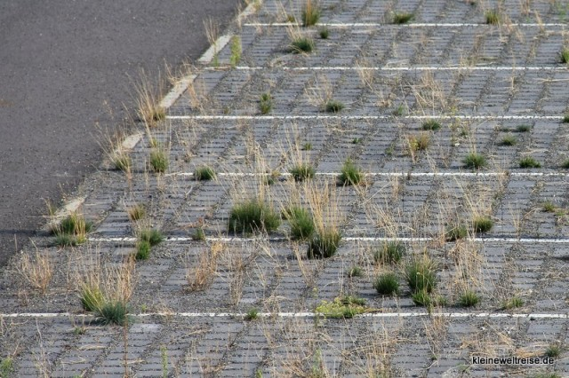 Gras zwischen den Steinplatten