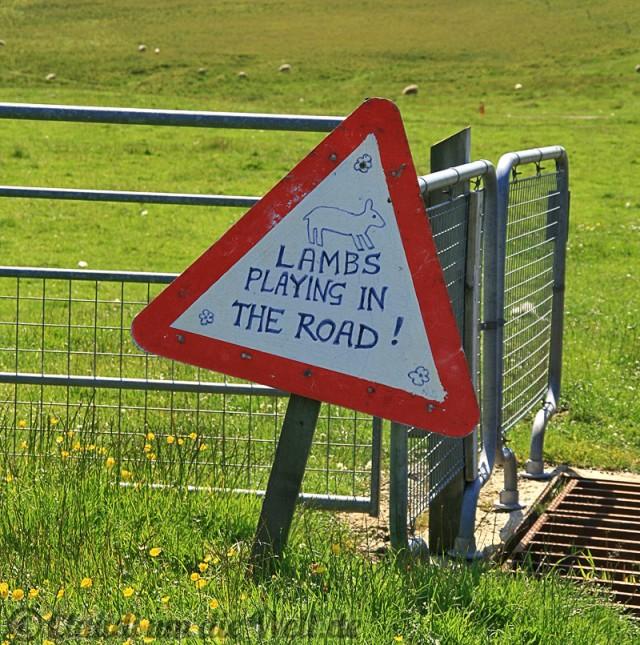 Warnung vor dem Lamm (Shetlands)