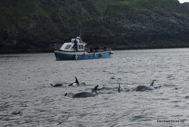 Das Boot und die Delphine