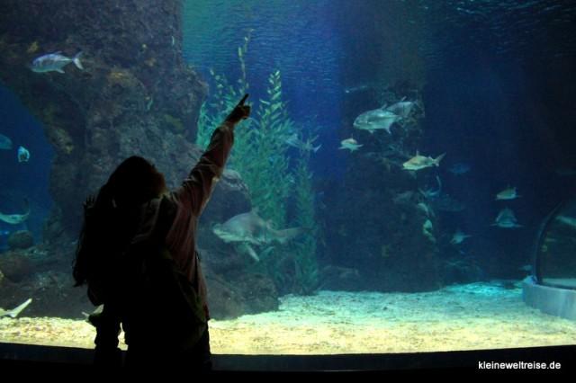 Silhouette im Aquarium