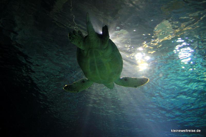 Die Wasserschildkröte hat Zeit :)